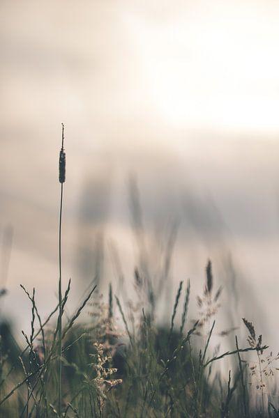 Gras tegen de ondergaande zon van Robert Wiggers