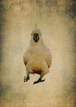 Gelber Kamm Kakadu 3 von Anouschka Hendriks