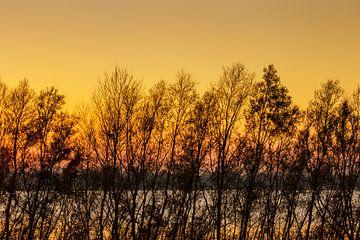 Gele lucht van René Roos
