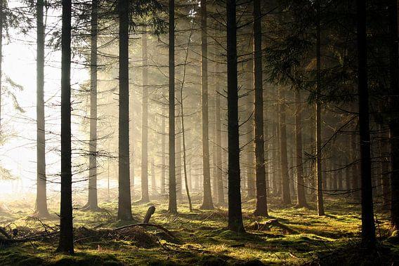 into the light II van Irene Grabienski