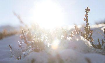 Wintersonne von Nathan Marcusse