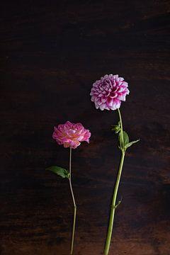 Roze Dahlias bloemen op een houten tafel van Nfocus Holland
