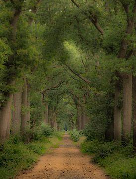 Een mooie boslaan van Michel Knikker