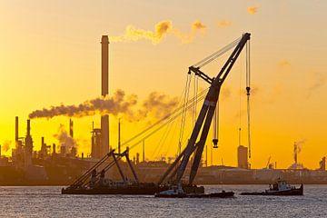 Grue flottante pendant le lever du soleil sur Anton de Zeeuw