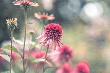 Blumen Teil 187 von Tania Perneel