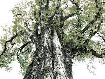Tree Magic 118 - Nightfall! van MoArt (Maurice Heuts)
