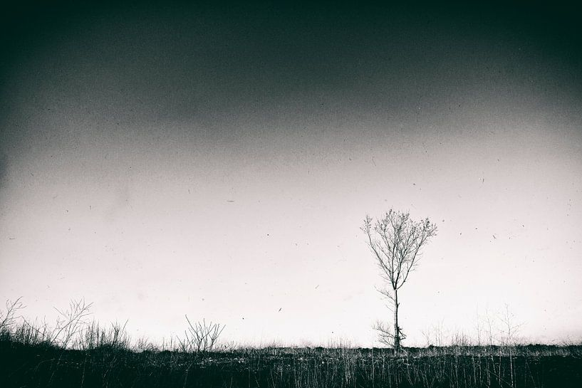 Landscape II van Rene Kuipers