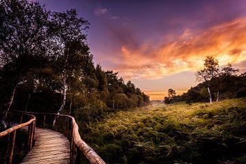 Nationaal park 'De Meinweg' van Juul Hekkens