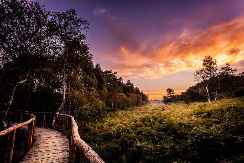 Nationaal park 'De Meinweg' sur Juul Hekkens