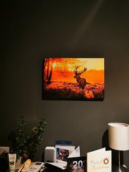 Klantfoto: The Deer van Nova Art, op canvas
