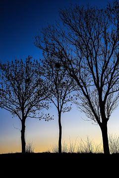 Drie zwarte bomen van