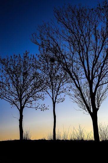 Drie zwarte bomen