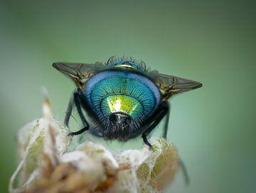 keizersvlieg von ton vogels
