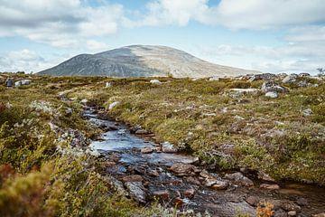 Dovrefjell National Park Noorwegen Scandinavië van Anneloes van Acht