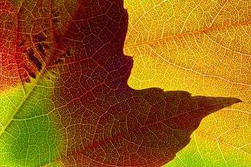 Herfstbladeren 2 van Henk Leijen