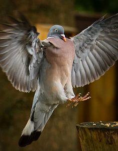 Stoere Houtduif met engel vleugels van Sran Vld Fotografie