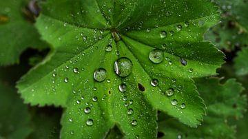 Groen van Arjo van Timmeren