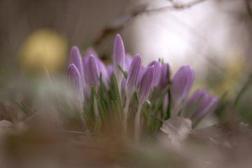Blumen Teil 60 von Tania Perneel