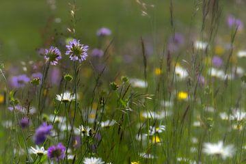 Beautiful flowers  sur René Pronk
