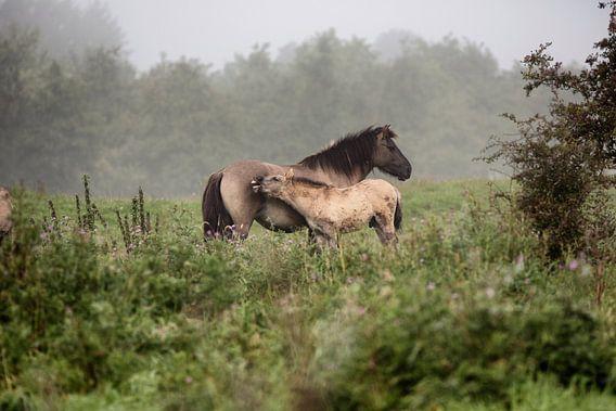 Tarpan met veulen / Tarpan with foal