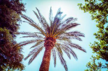 Palmboom von Nannie van der Wal