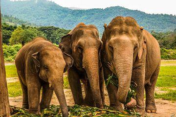 Gerettete Elefanten von Michelle van den Boom