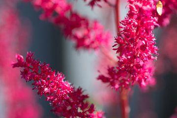Close-up mooie rode bloemen sur Hans Tijssen