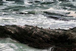 Zee van Fotojeanique .