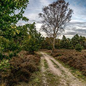 Waldweg mit Baum von Peter van Nugteren