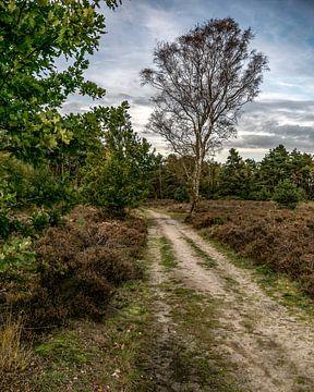 Bospad met boom van Peter van Nugteren