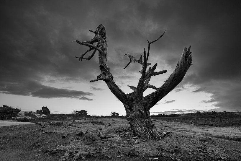 Solitude boom Aekingerzand van Peter Bolman