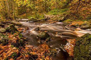 Herfst bij de vallei van de Hoëgne van