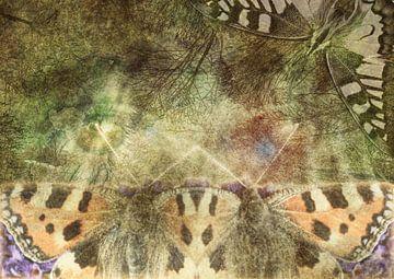 Ich erinnere mich an Schmetterlinge von Andreas Schulte