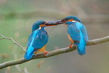 IJsvogel - Liefde aan de waterkant van