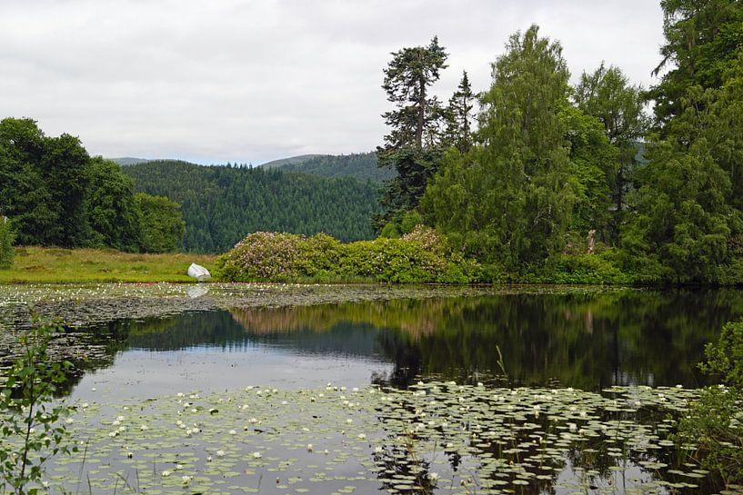 Lelievijver bij de Plodda watervallen van Babetts Bildergalerie