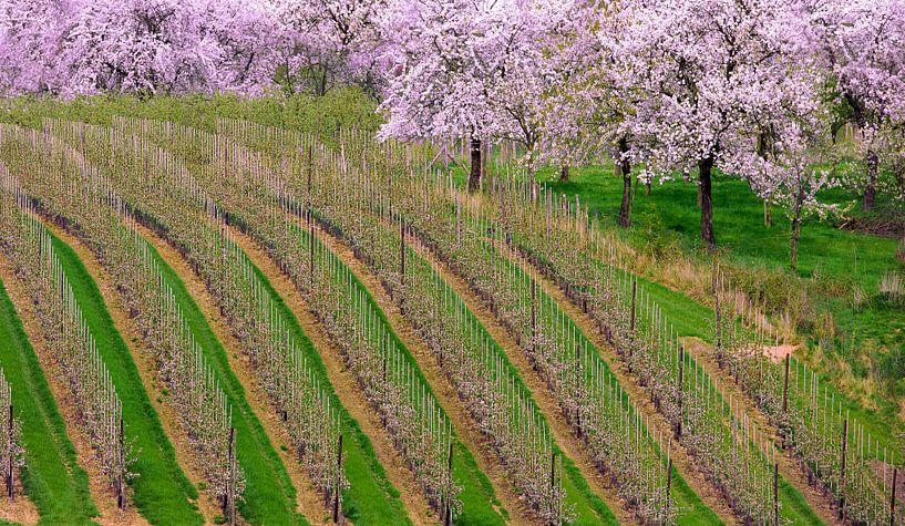 2000 Blossoms van Adrien Hendrickx