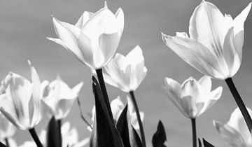 Frühling ist in der Luft! von Peter Bartelings Photography
