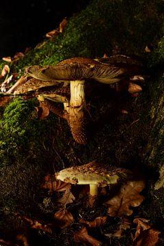 Paddenstoelen op een boomstam van Gerard de Zwaan