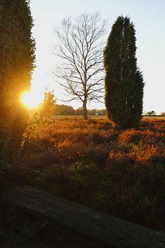 Die Heide bei Sonnenuntergang von Frank Briske
