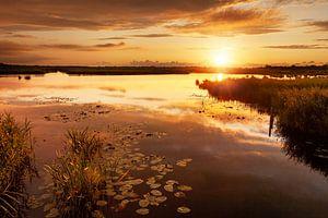 Gouden Zonsondergang De Onlanden