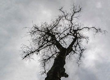 silhouet van een boom van Fred Leeflang