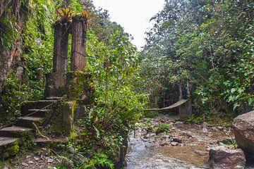Dschungel in Kolumbien von Tim van Breukelen