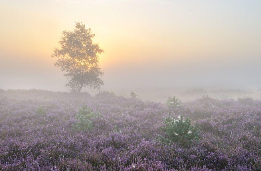 Zonsopkomst Kalmthoutse Heide
