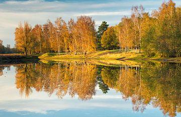 Herfstmiddag in het bos, Nederland van Sebastian Rollé - travel, nature & landscape photography
