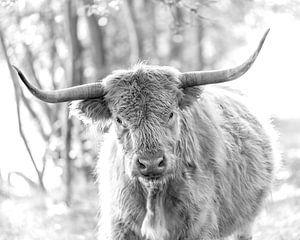 Schotse Hooglander zwartwit portret II van Teun Ruijters