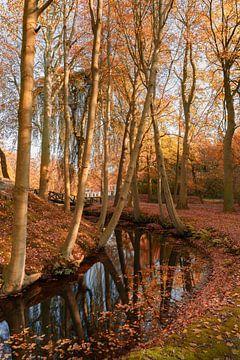 Herfst in Friesland 7. Staniastate in Oentsjerk van Marcel Kieffer