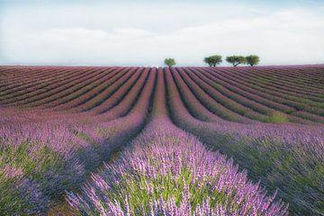 Velour de Lavendel, Margarita Chernilova von 1x