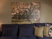 Kundenfoto: Blühender Baum im Obstgarten - Geo Poggenbeek von Hollandse Meesters, auf leinwand