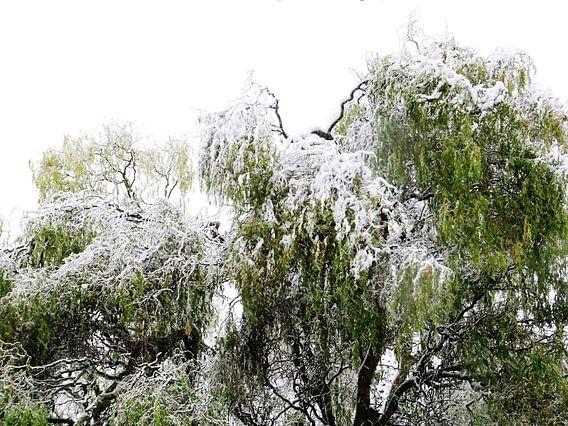 Tree Magic 180