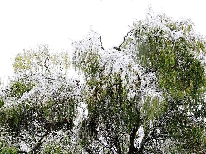 Tree Magic 180 van MoArt (Maurice Heuts)